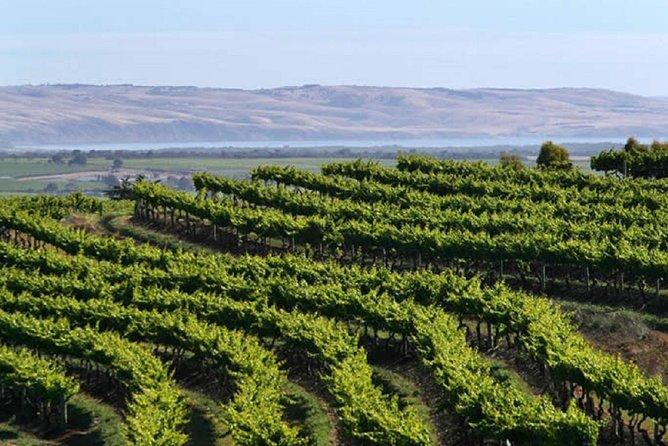The vineyards of McLaren Vale