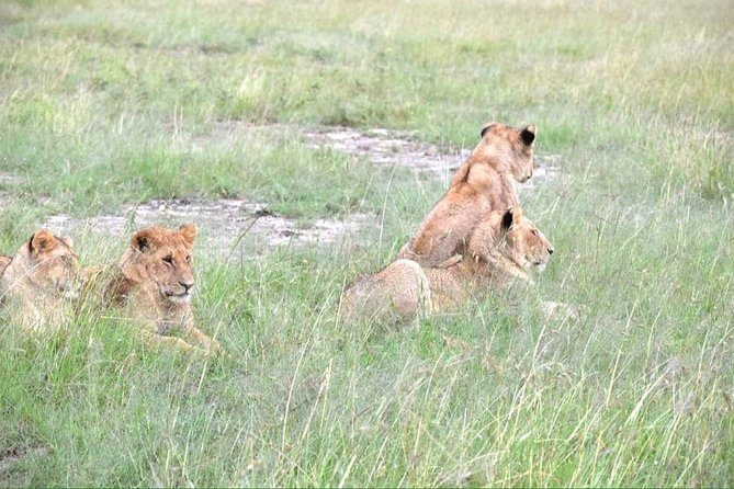 4 Days Masai Mara lake Nakuru budget safari photo 3