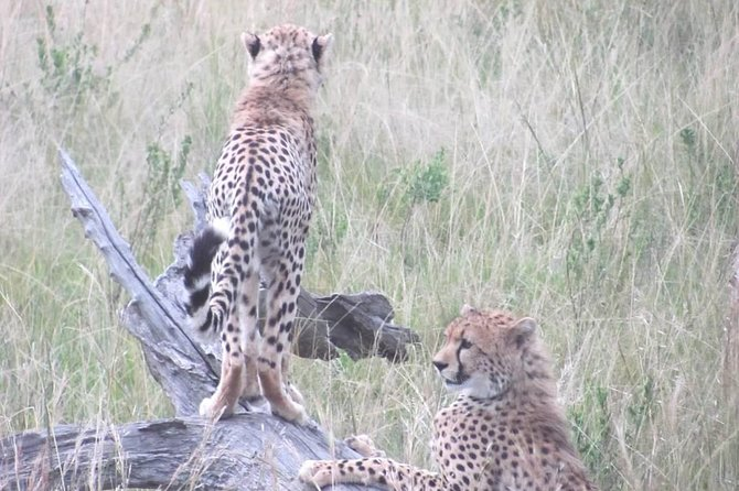 4 Days Masai Mara lake Nakuru budget safari photo 4