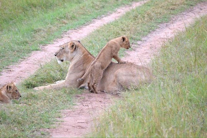 4 Days Masai Mara lake Nakuru budget safari photo 6