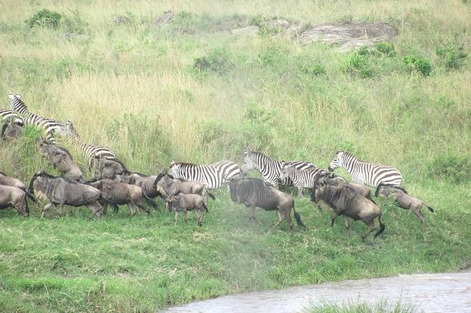 4 Days Masai Mara lake Nakuru budget safari photo 9
