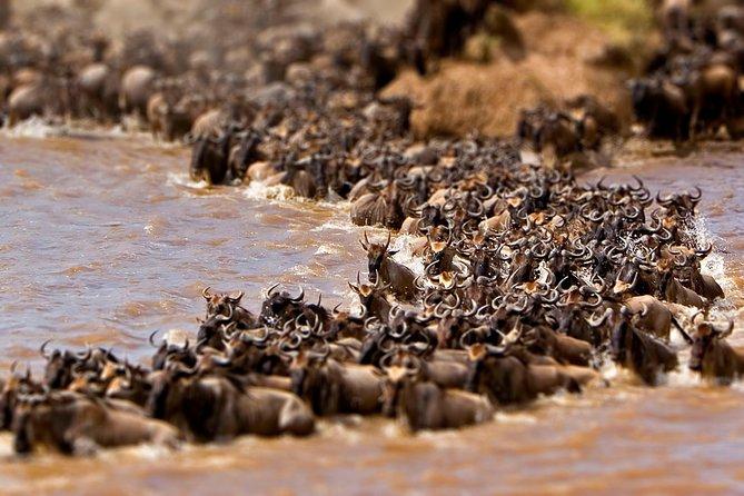 6 Days Amazing Wildlife Experience - Lake Nakuru & Maasai Mara