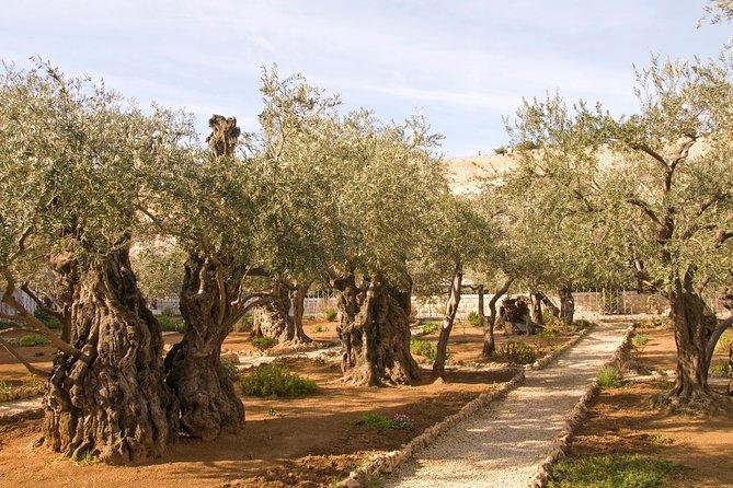 The Best of Jerusalem and Bethlehem - Shore Excursion from Ashdod