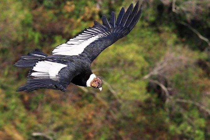 Full-Day Tour Antisana National Park & Condors Watching