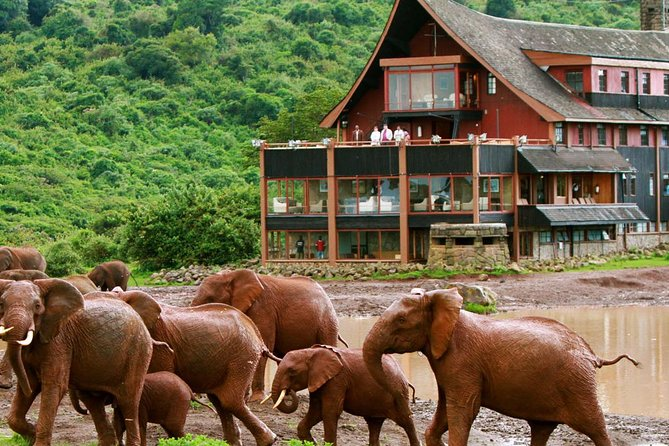 Private 6 Days Aberdares, Lake Nakuru and Masai Mara Wildlife Safari
