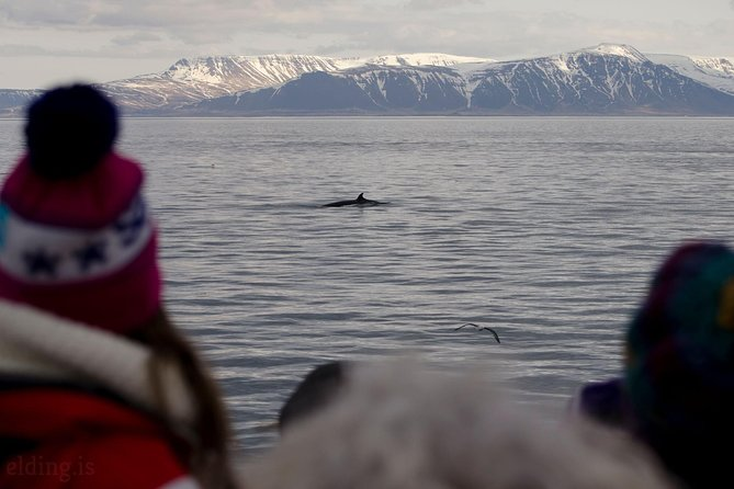 Classic Whale Watching from Reykjavík