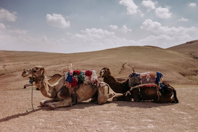Desert Agafay & Atlas Mountains with Camel Ride Day Trip from Marrakech