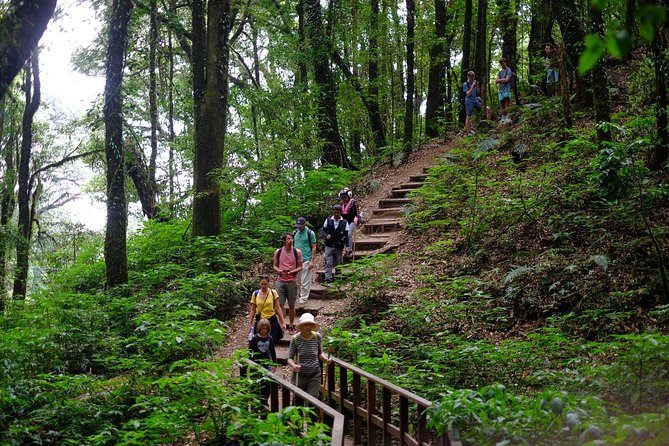 Inthanon Small-Group with Kew Mae Pan Trail from Chiang Mai include Lunch