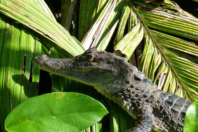 Tortuguero Clasicos - 2 Tours: Canoe and day hike