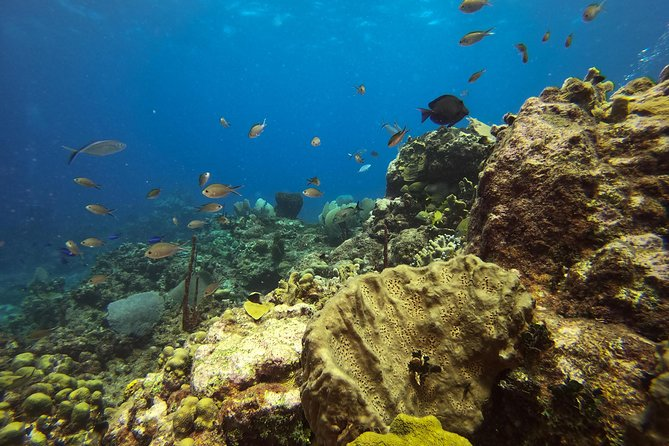Full-Day Catalina Island Scuba Diving Tour from Punta Cana photo 8