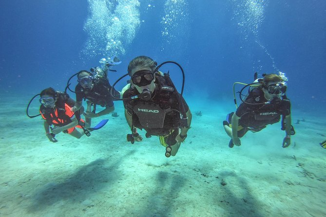 Full-Day Catalina Island Scuba Diving Tour from Punta Cana photo 9