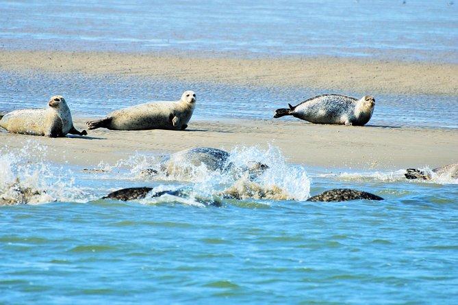 Private Seal Safari en el sitio de la UNESCO Waddensea desde Amsterdam