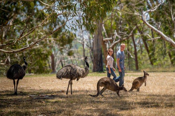 Emu's and Kangaroo's