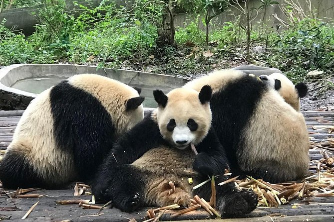 4hours panda tour with transfer