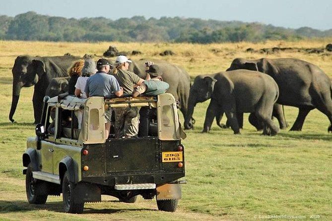 Day Tour from Colombo to Sigiriya, Pidurangala Rock & National park safari