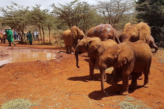 Half day giraffe centre and elephant orphanage guided tour