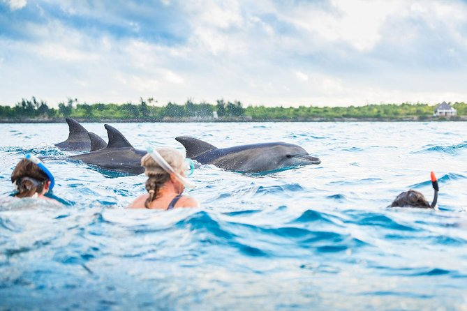 Amazing Safari Blue Snorkeling Sea trip - Zanzibar photo 28