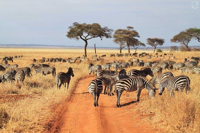 7-Day Tanzania Unforgettable Safari Camping Adventure Tour