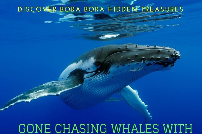 BORA-BORA Private Whale Watching