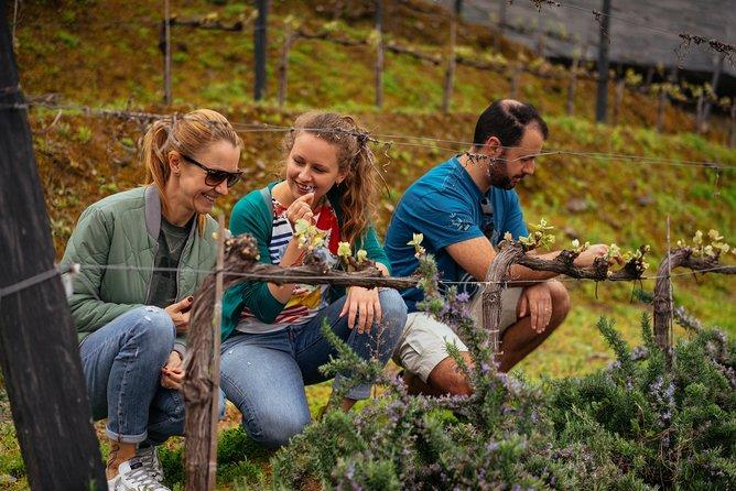 Private Day Trip Through Douro Valley