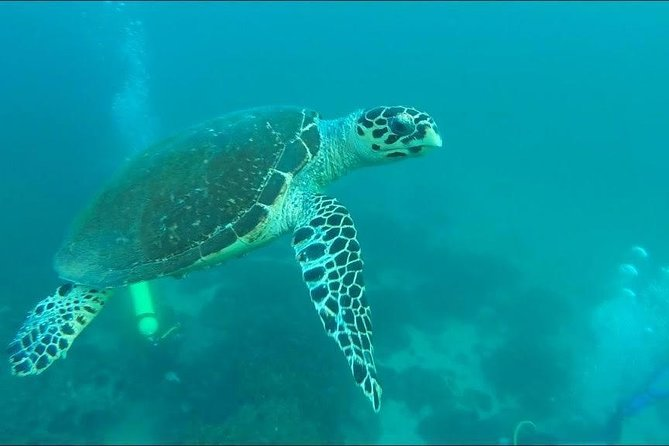 Snorkeling to Daymaniyat