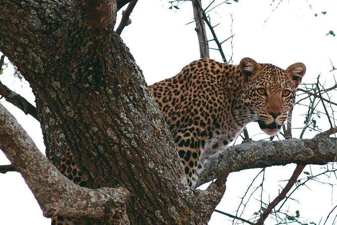 Serengeti, Ngorongoro and Tarangire 5 days safari