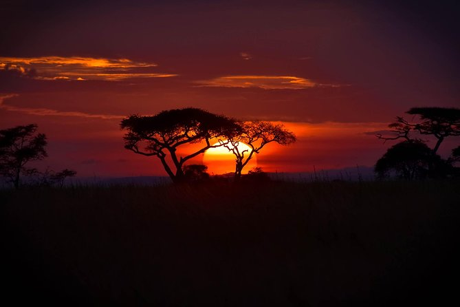 8 Days: Serengeti Big Cats And Bushmen S Of Eyasi. photo 8