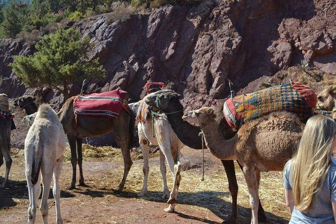 3 Valleys & Berber Villages, Atlas Mountains photo 6