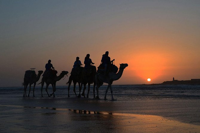 Essaouira: An unforgettable 2 hour ride on a camel