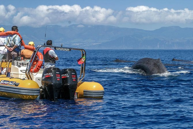 Azores Whale Watching & Islet Boat Tour