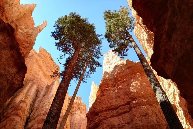 Bryce Canyon Day Trip from Las Vegas photo 4