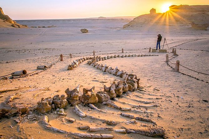 Day Trip to Valley of Whales from Cairo - Wadi El Hitan