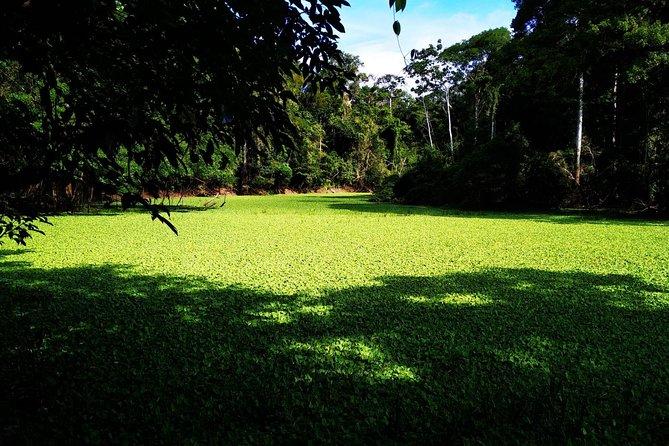 02 days amazon expedition in Pacaya Samiria national reserve
