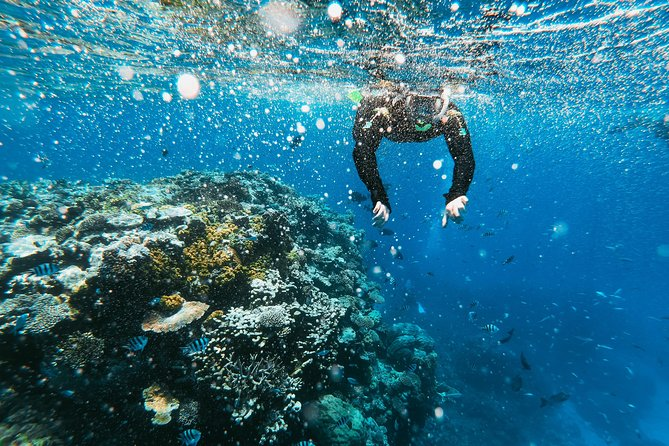 Reef Diving!
