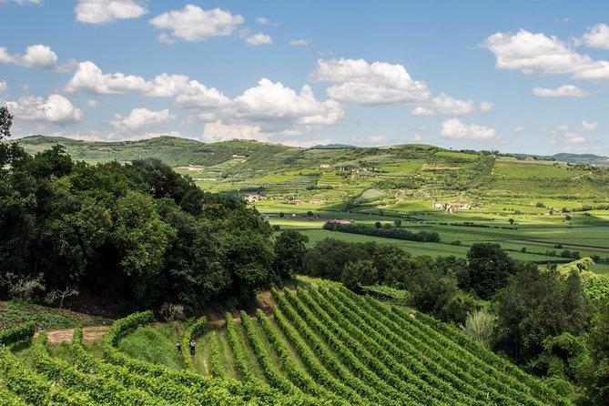 Amarone wine tour - visit Verona. From Venice