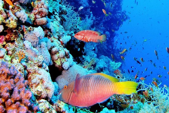 Full Day excursion to Red Sea from Luxor