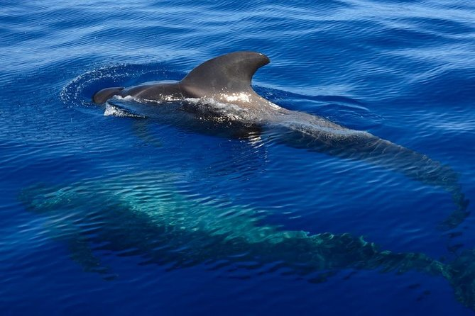 Private 3-Hour Whale & Dolphin Watching Experience