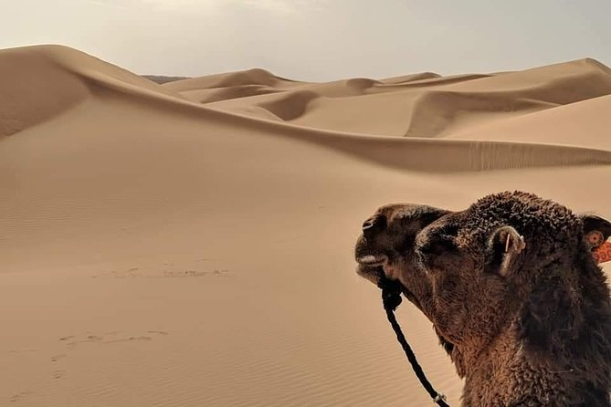 4 Days Sahara Tour to Erg Chegaga From Agadir Via Marrakech & Ouarzazat