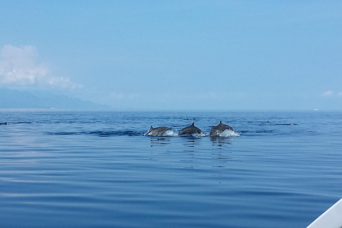 4 hours - Dolphins Adventure Tour in Lovina, Bali