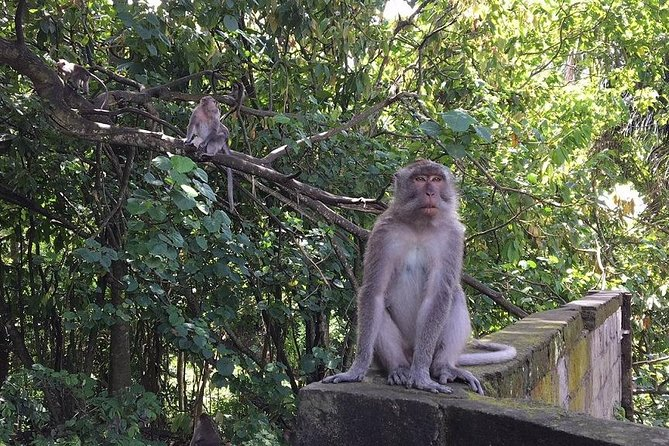 Highlights of Ubud: Nature, Rice Terrace, Waterfall, Temple and more