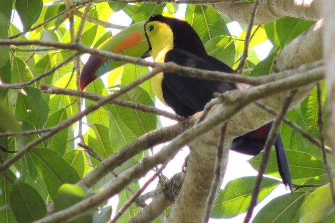 Guatemala Birding Tour at Tikal and Uaxactún National Park