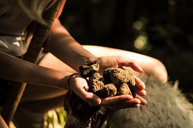 Cretan Truffle Hunting & Authentic Culinary with Cave of Zeus