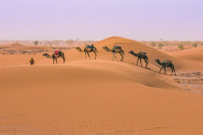 Morocco desert tour from Marrakech to Fes 3 Days photo 4