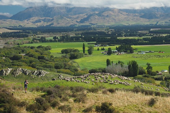 Merino Sheep Farm Tour | Family Operated | From Christchurch