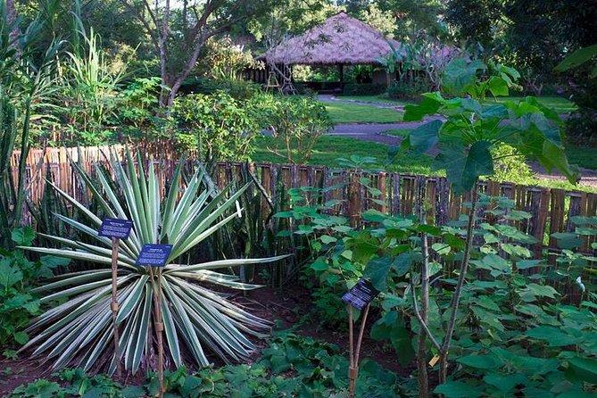 Half Day- Flora Wisdom of Laos