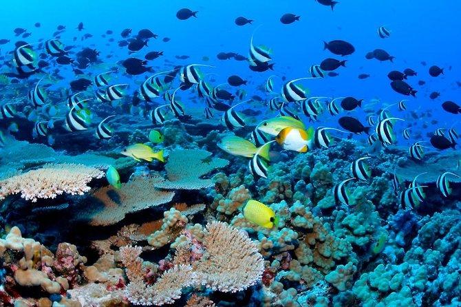 ATV COMBO CHALLENGE (reef snorkel, atv, ziplines, cenote, lunch and transport)