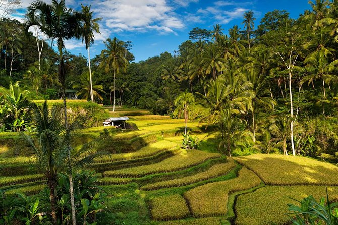 Bali 4-Day Tour Package : The Most Complete of Bali