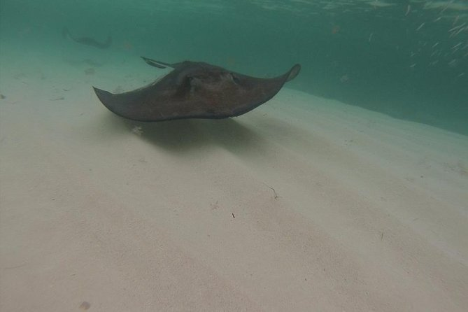 Grand Turk Gibbs Cay Stingray and Conch Dive Adventure