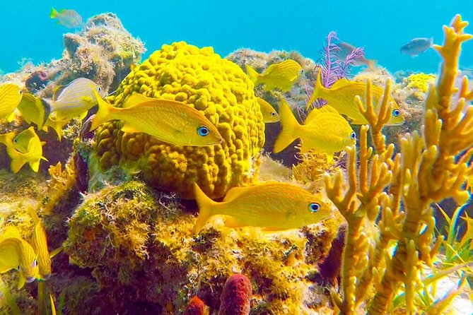 Ultimate Turks and Caicos Snorkeling Tour