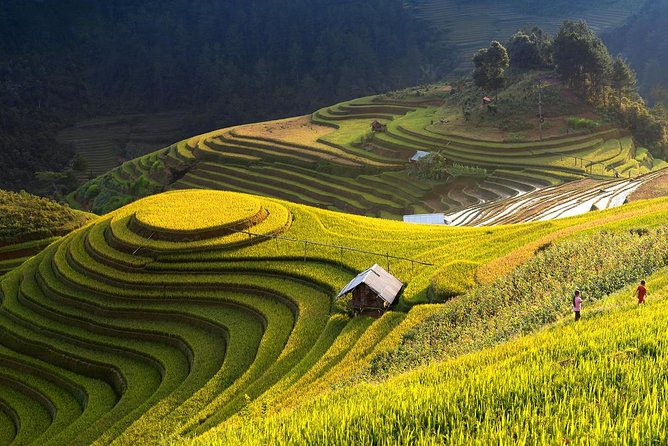 Sapa To Mu Cang Chai & Hagiang Terraced Field Trail (Private Tour 9Days 8Nights)
